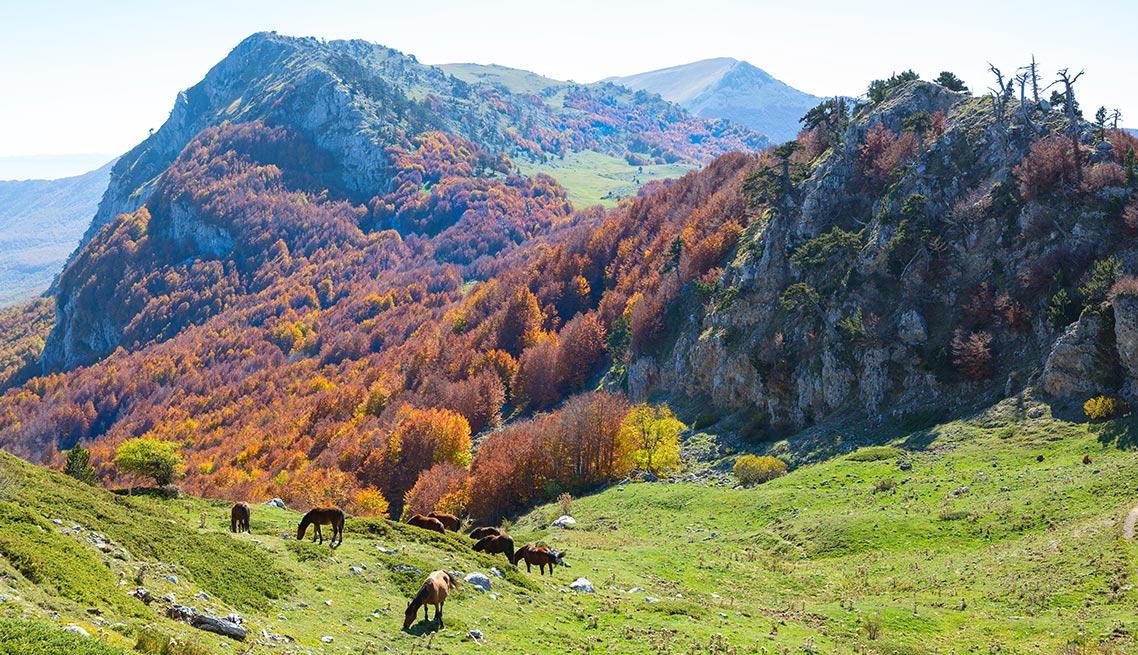 Costantino - Parchi Nazionali: Sila, Pollino, Aspromonte